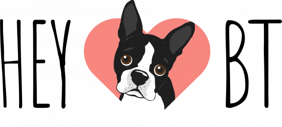 Hey Boston Terrier